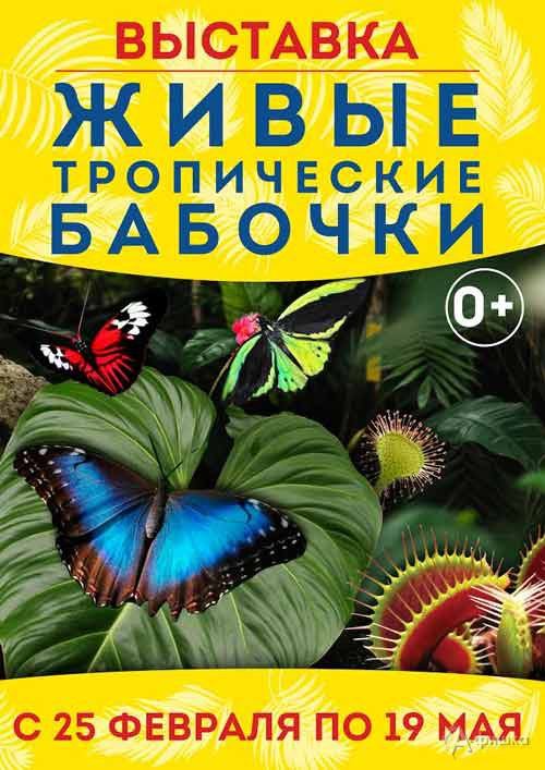 Интерактивная экспозиция «Живые тропические бабочки»: Афиша выставок в Белгороде