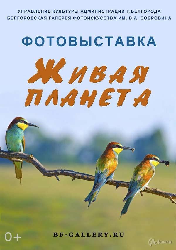 Фотовыставка «Живая планета»: Афиша выставок в Белгороде