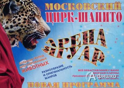 Гастроли в Белгороде: московский цирк-шапито «Арена Ягуар»