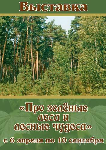 Выставка «Про зелёные леса и лесные чудеса» в Краеведческом музее: Афиша выставок в Белгороде