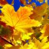 Детская афиша Белгорода: праздник «Осенние каникулы» в Доме офицеров