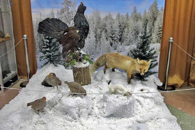Выставка «Где животные зимуют» в Краеведческом музее: Афиша выставок в Белгороде