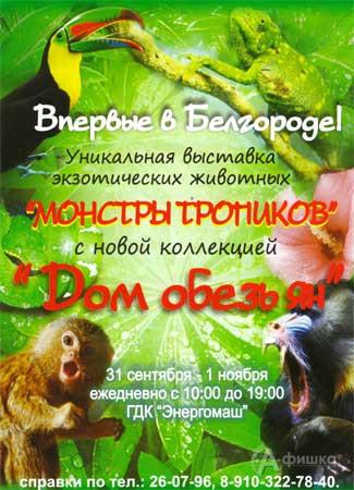 Выставка уникальных экзотических животных «Монстры тропиков» в Белгороде