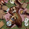 Кино в Белгороде: семейная анимация «Медведь Йоги 3D»