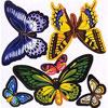 Зоовыставка в Белгороде: «Живые тропические бабочки»