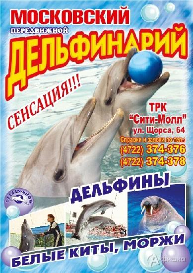 Гастроли Московского передвижного дельфинария в Белгороде