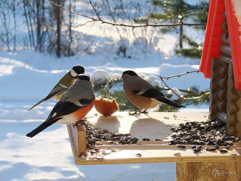 Час полезной информации «Спасите птицу от мороза!»: Детская афиша Белгорода
