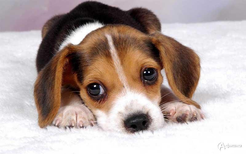 Диспут «За что человек собак любит?»: Детская афиша Белгорода