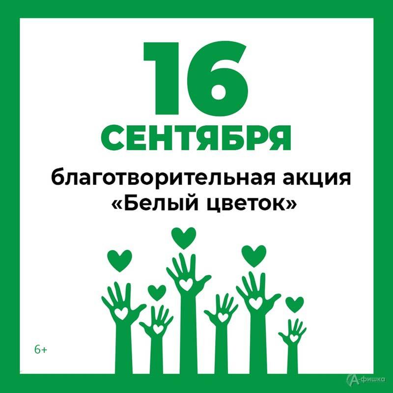 Благотворительный марафон «Белый цветок 2021»: Не пропусти в Белгороде
